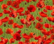 Remembering Poppies on Green